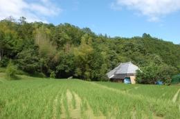 裏の山に囲まれた田んぼ