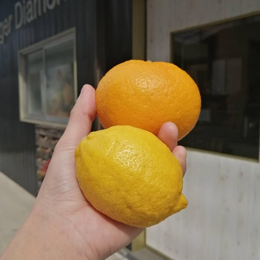 広島県瀬戸田 無農薬レモン&甘夏